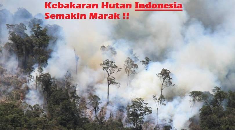 Kebakaran Hutan Indonesia Semakin Marak